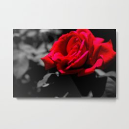 The Beauty of a Rose Metal Print