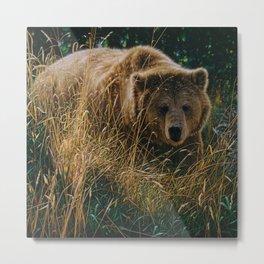 Brown Bear - Crossing Paths Metal Print