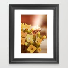 Honey herder 2 Framed Art Print