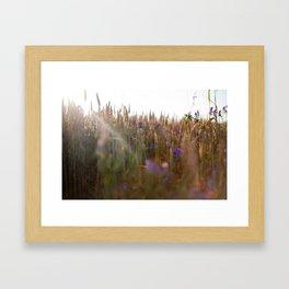 Wheat Dreams Framed Art Print