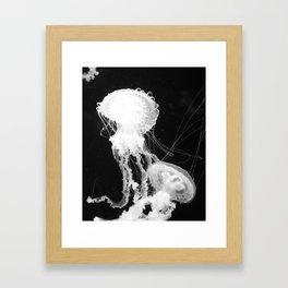 Medusozoa Framed Art Print