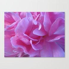 petals pink Canvas Print