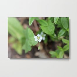 Tiny White Wildflower Metal Print