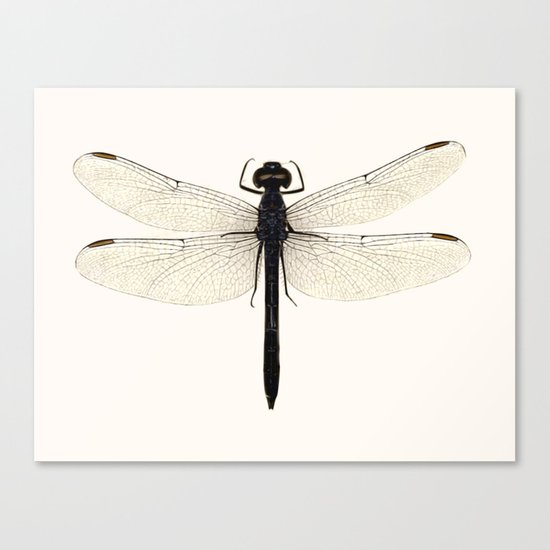 dragonfly #5 Canvas Print