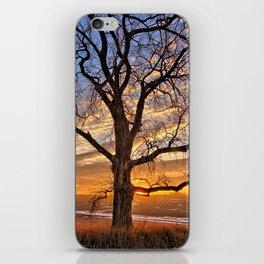 Winter Cottonwood iPhone Skin