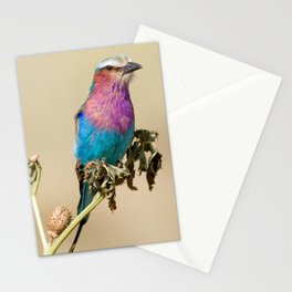Lilac breasted Roller Stationery Cards