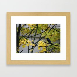Raven Photography, a yellow coloured tree in Seattle caught my eye Framed Art Print