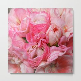 Pelargonium Dreams - Denise Metal Print