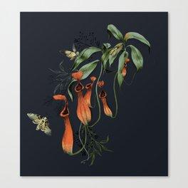 Carnivorous Pitcher Plant Canvas Print