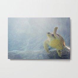 Coasting Turtle Metal Print