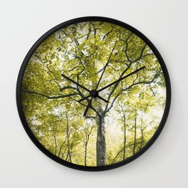 Big trees Wall Clock