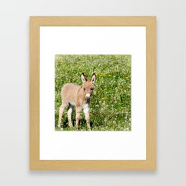 Donkey Baby  Framed Art Print