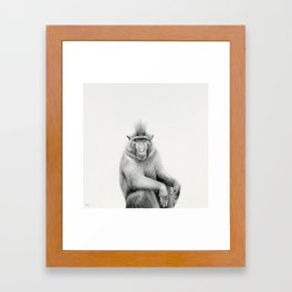 Macaca nigra / Black Crested Macaque Framed Art Print