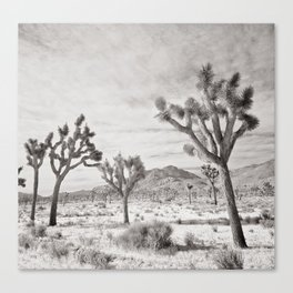 Joshua Tree Grey By CREYES Canvas Print