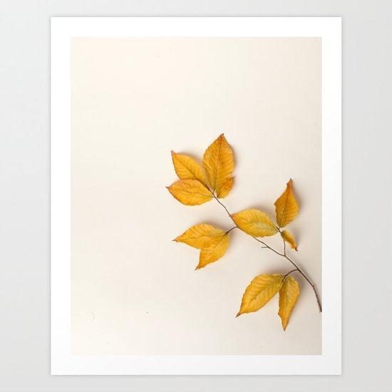 Yellow Beech Leaves Art Print