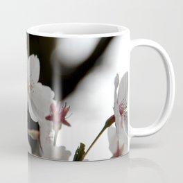 Sakura blossoms up close Coffee Mug