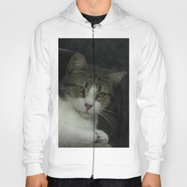 through the looking glass - cat meditating at the window Hoody