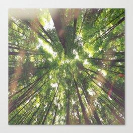 "The trees say ""Hello"" Canvas Print"
