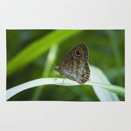Ypthima SP Butterfly Borneo Rug