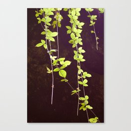 Green Dawn Canvas Print