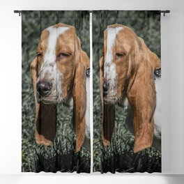 Skeptical Basset Hound Puppy Squinting Long Eared Dog Cute Bassett Blackout Curtain