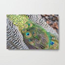 Peacock feathers pattern Metal Print
