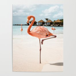 Pink Flamingo Art Print | Aruba Island, Caribbean Photo | Travel Photography Poster