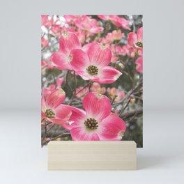 quixotic pink dogwood Mini Art Print