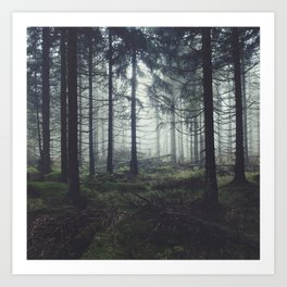 Through The Trees Art Print