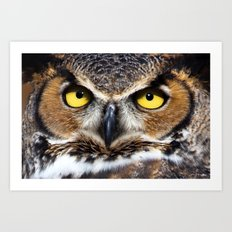 Great Horned Owl Face Art Print