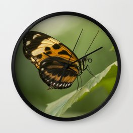 Melinaea ethra  butterfly on the leaf Wall Clock
