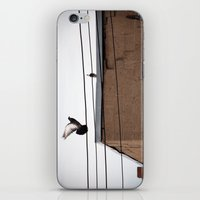 pigeon iPhone & iPod Skins featuring Pigeon by Allison Morse
