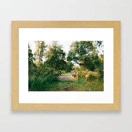 Holme Woods 2 Framed Art Print