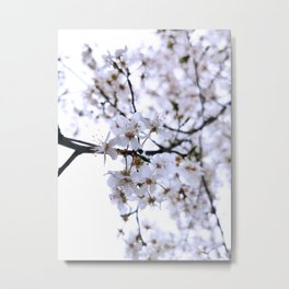 White Cherry Blossom 2 Metal Print