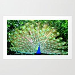 Peacock Feathers   Bird   Birds   Nadia Bonello   Canada Art Print