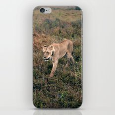 Lone Lion. iPhone Skin