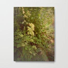 Beautiful Grasses. Metal Print