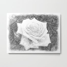Pink Roses in Anzures 4 Charcoal Metal Print