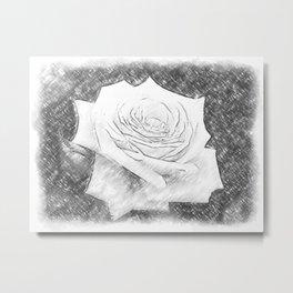 Pink Roses in Anzures 4 Charcoal Metal Print