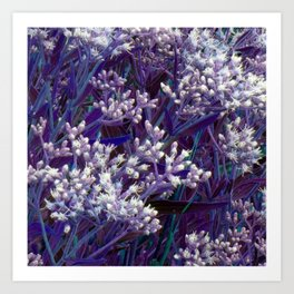 Bunches of Tiny Flowers Art Print