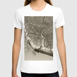 Birch tree #01 T-shirt
