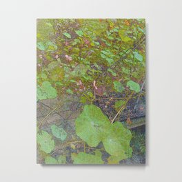 Nasturtiums in March Metal Print