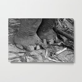 Elephant Feet Metal Print