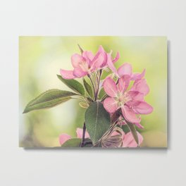 Pink Spring Modern Cottage Chic Flowers Art A460 Metal Print