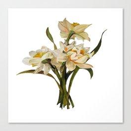 Double Narcissi Spring Flower Bouquet Canvas Print