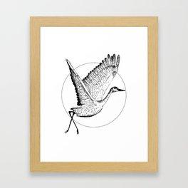 Flying Sandhill Crane Black And White Illustration / Crane Bird Drawing / Flying Crane Framed Art Print
