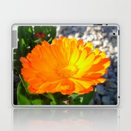 Bright Orange Marigold In Bright Sunlight Laptop & iPad Skin