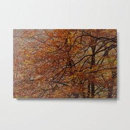 autumm' colours Metal Print