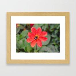 Luxembourg fleur Framed Art Print