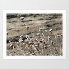 wildflowers seaside in pearl color Art Print